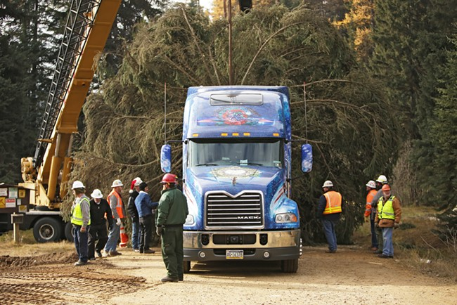 Workers guide the 88-foot Engelmann Spruce onto a truck. - YOUNG KWAK