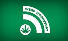 WW: Washington State Legislature thinks about marijuana; Jamaica is about to change law on pot