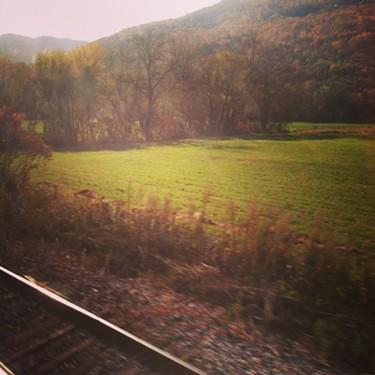 train-leaves.jpg