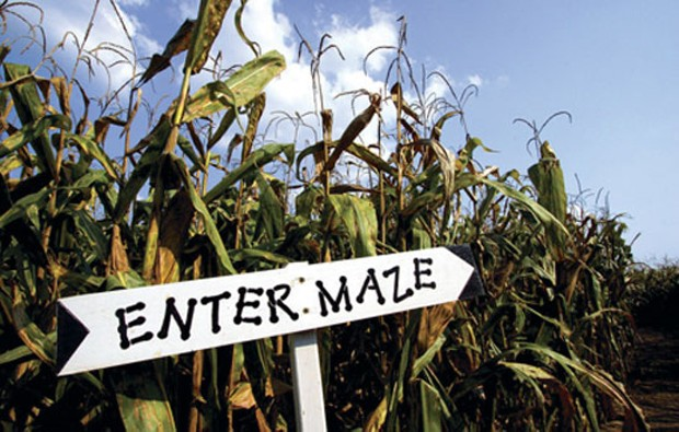PERCY FARM CORN MAZE