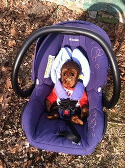 The car seat is set up and ready to go, thanks to Gori, my favorite childhood chimpanzee. - MEGAN JAMES