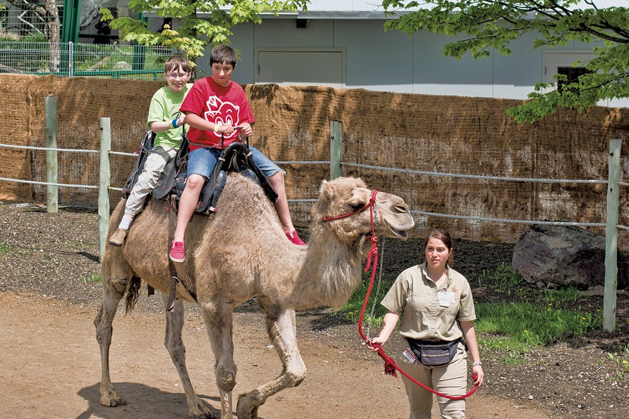 David and Olive riding a camel - COURTESY OF JON SHENTON