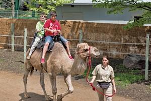 David and Olive riding a camel - COURTESY OF JON SHENTON