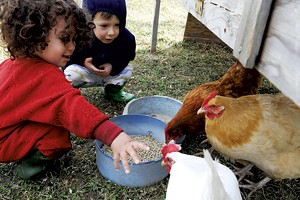 Ezrah Fishman and Silvan Thompson feeding the chickens at Elephant in the Field Holistic Education & Childcare in Waterbury.