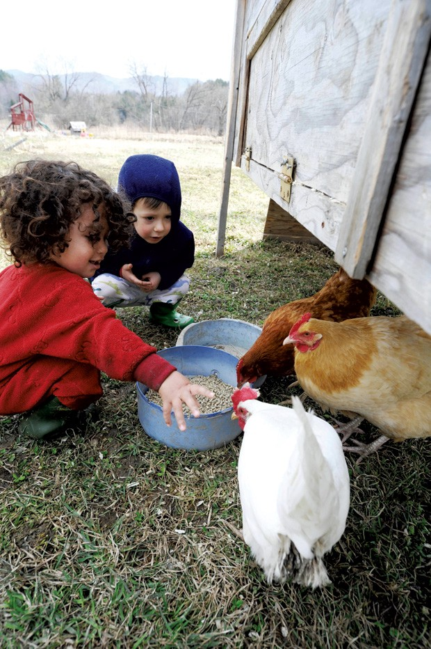 Ezrah Fishman and Silvan Thompson feeding the chickens at Elephant in the Field Holistic Education & Childcare in Waterbury. - JEB WALLACE-BRODEUR