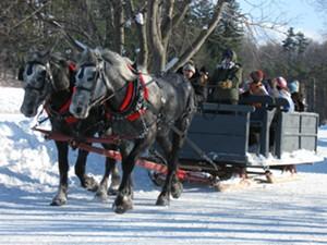 020609_wf_horses.jpg