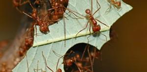 montshire_ants.jpg
