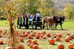 pumpkinfestival_homebox.jpg