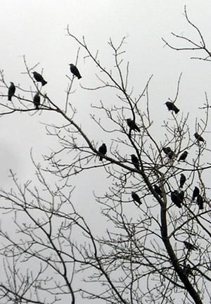 birds-in-trees-773771.jpg