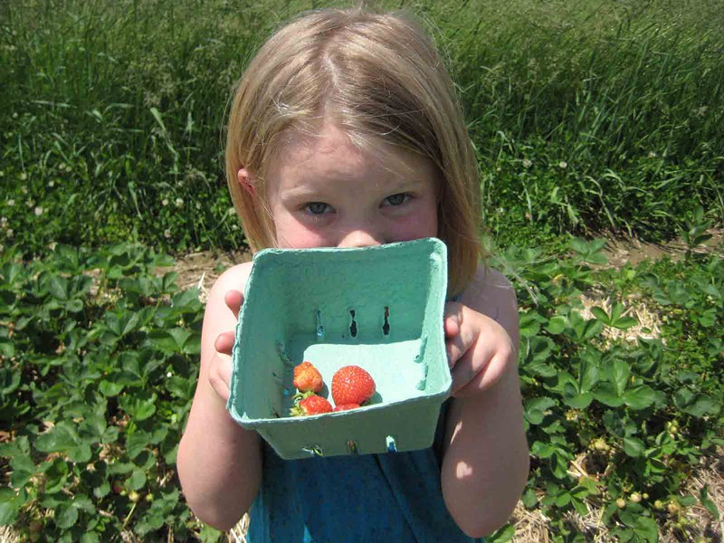 Siobhan P. picking berries at the Charlotte Berry Farm.
