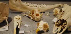 skulls707x346.jpg