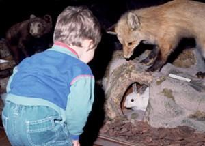 boy-and-fox.jpg