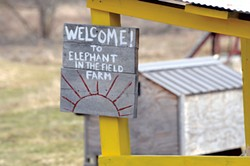 Elephant in the Field daycare in Waterbury - JEB WALLACE-BRODEUR
