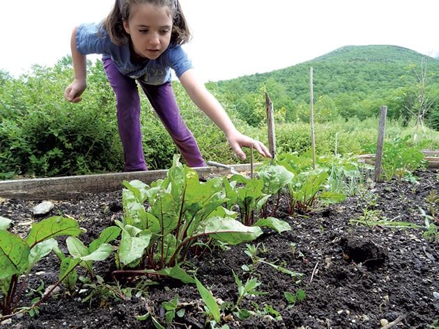 Lucy tending to her family's garden. - LAURA SORKIN