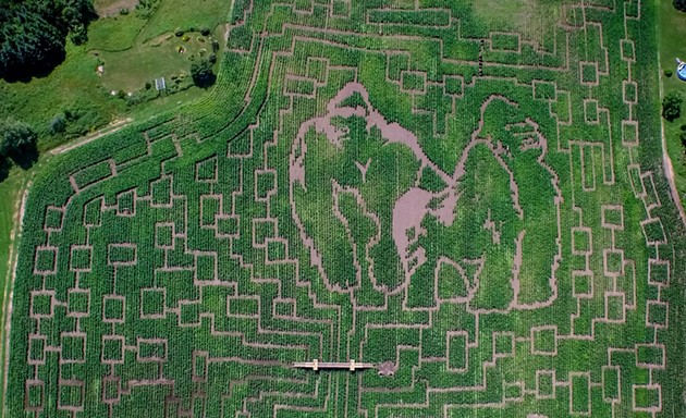 The 2015 Great Vermont Corn Maze from above - COURTESY OF GREAT VERMONT CORN MAZE