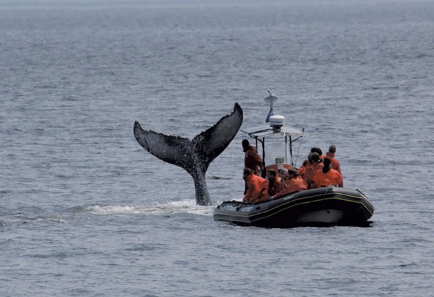 A whale-watching trip - OTIS EXCURSIONS