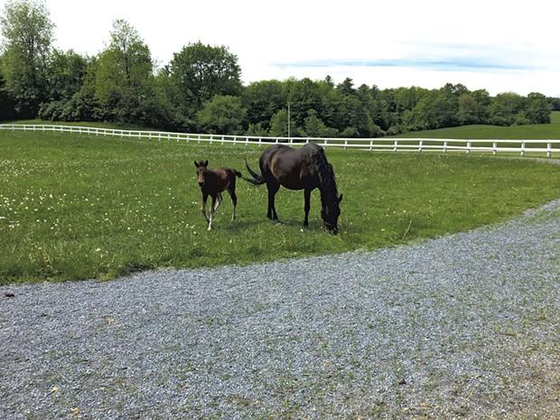 Horses at pasture. - SARAH TUFF DUNN