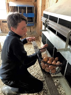 Axel collects eggs from the nesting boxes in his family's barn - BRETT STANCIU