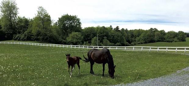 UVM Morgan Horse Farm