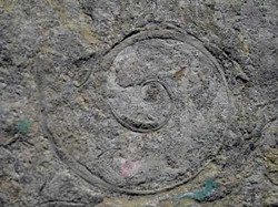 A fossil from the the Goodsell Ridge Preserve - COURTESY IMAGE