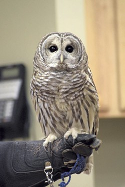 An owl from VINS - COURTESY OF VINS