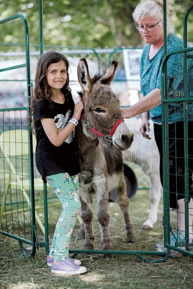 Sadie Simon, 7, of Burlington, poses with Applejack the donkey, owned by John and Pauline Broe of the Vermont Reindeer Farm in West Charleston. - SAM SIMON