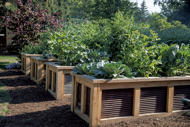 Lush, organic vegetables pack four raised beds. - JAMES BUCK