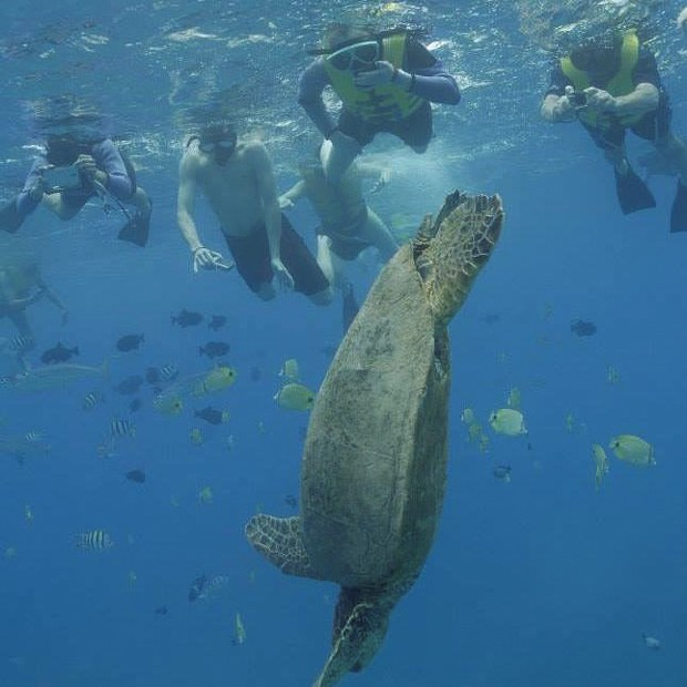 Jamie swimming with sea turtles in Hawaii - COURTESY OF JOANNE LECLERC