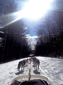 Farley enjoys time in the woods with his dogs - COURTESY OF OCTOBER SIBERIANS