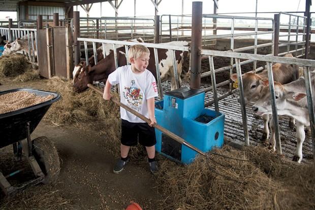 Rowdy feeds calves - CALEB KENNA
