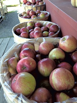 Prepicked apples outside the farm store - JOY CHOQUETTE