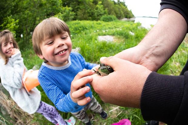 Bo meets a frog at Shelburne Pond - CAT CUTILLO