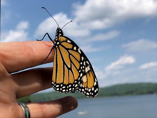Heather releasing a monarch - HEATHER POLIFKA-RIVAS