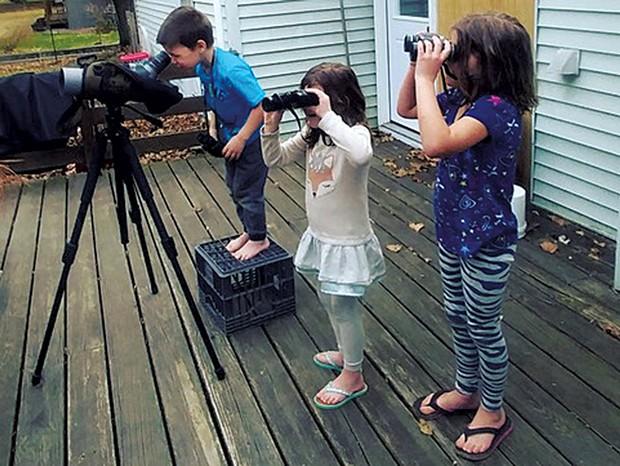 Backyard birding - BRIDGET BUTLER