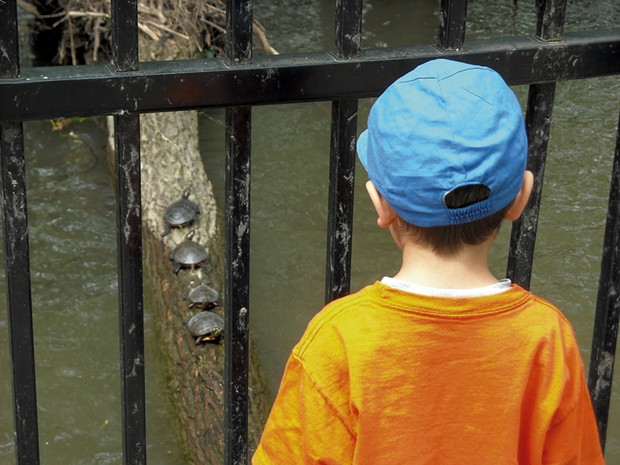 Heather's son watching turtles at Colchester's Delta Park, 2011 - COURTESY OF HEATHER FITZGERALD
