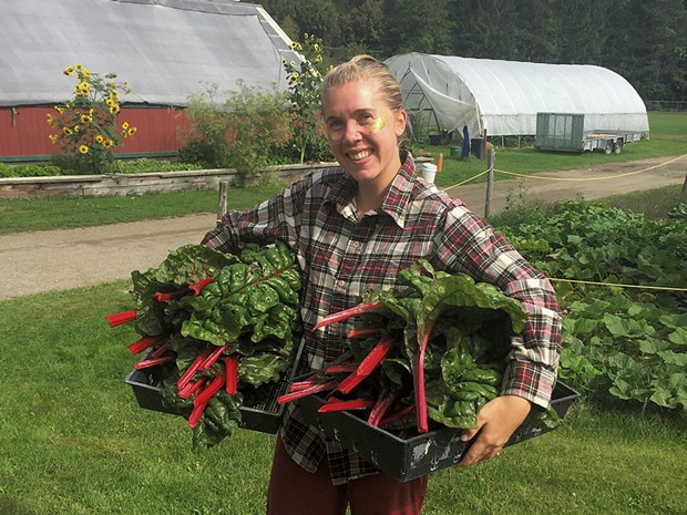 A Montpelier High School student harvesting Swiss chard for the cafeteria - COURTESY OF TOM SABO