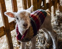 Baby Farm Animal Celebration