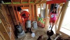 Habitat: School Garden & Chicken Coop