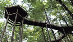 VINS' Canopy Walk Gives Visitors Bird's-Eye View