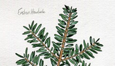 A Simple Guide to Vermont's Evergreens
