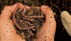 Can You Dig It? Make Your Own Worm Farm With These Simple Steps
