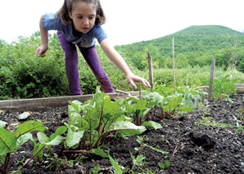 Beets & Carrots: Two Veggies to Grow at Home