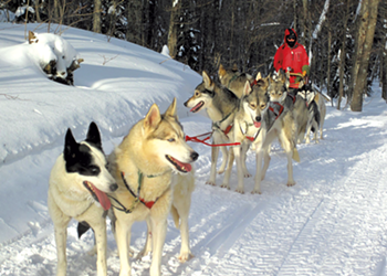 Born to Run: Vermont Sled Dogs Delight, Compete and Educate