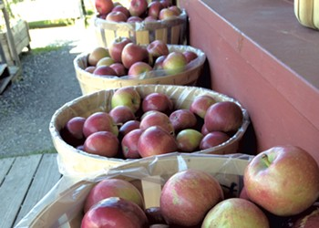 Apple Picking & Animal Petting at South Hero's Allenholm Farm