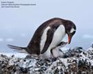 2017 Audubon Photography Awards Show