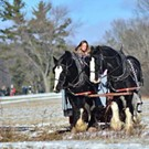 Horse-Drawn Rides