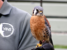 Screech and Hoot: The Science of Bird Communication