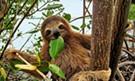 Meet a Sloth