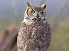 Owls and Their Calls