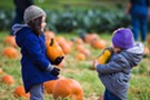 Pumpkin Festival at Cedar Circle Farm
